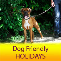 No Fly Dog Friendly Holidays
